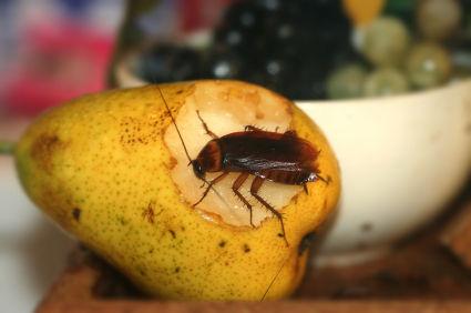 cockroaches3.s600x600