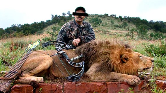 Lions bred to be shot in South Africa's 'canned hunting' industry - image The Guardian