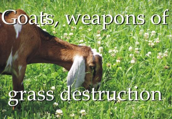 goatsweapons