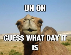 uhoh humpday