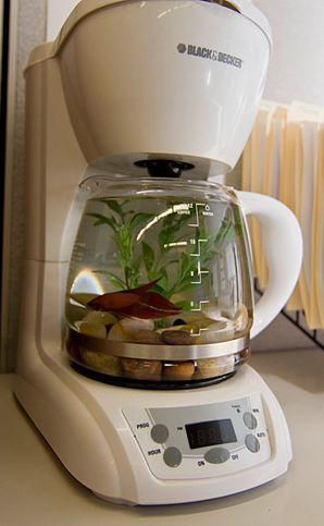 coffeefishbowl