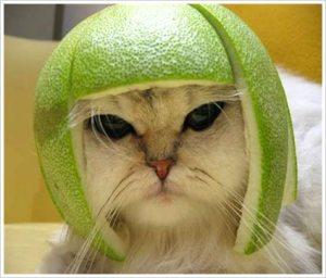 Green thinking cap