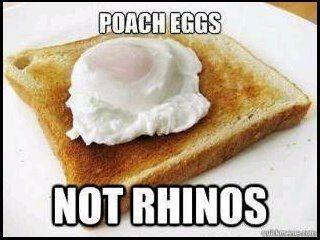 poacheggsmotrhinos