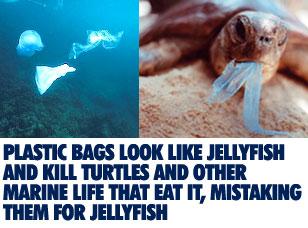 plastic-kills-marine-life