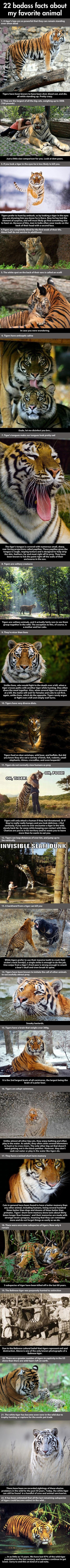 facts-about-tigers-446x9999