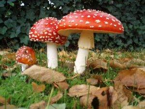 We typically imagine magic mushrooms