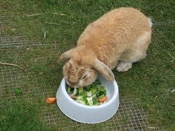 The problem with rabbit food is that one good fart and I'm hungry again