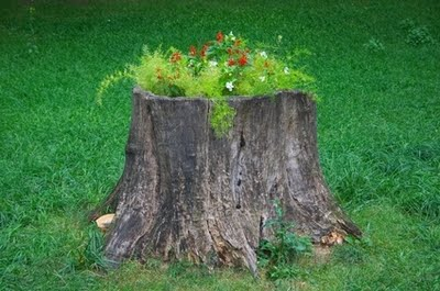 Tree stumps eco crap for Hollow tree trunk ideas