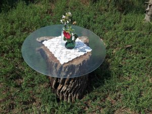 A tree stump table