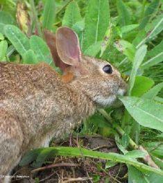 rabbit-500x563
