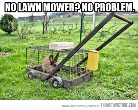 funny-bunny-mower-grass-lawn
