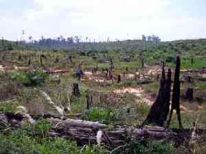 Deforestation on a grand scale for more crops