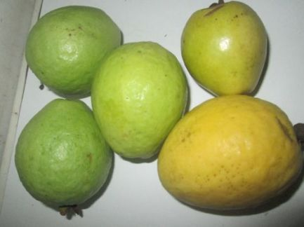 Guava in my kitchen at the moment