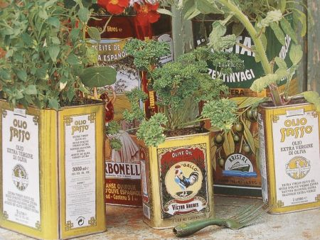 Plants in odd tins