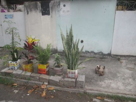 Plants on the street
